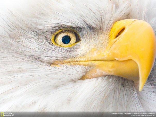Отобраны лучшие фото животных с фотоконкурса «National Geographic Traveler» - №13