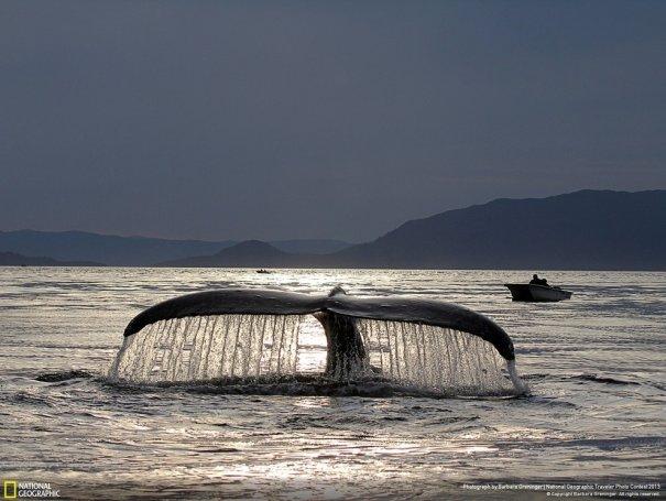 Отобраны лучшие фото животных с фотоконкурса «National Geographic Traveler» - №14