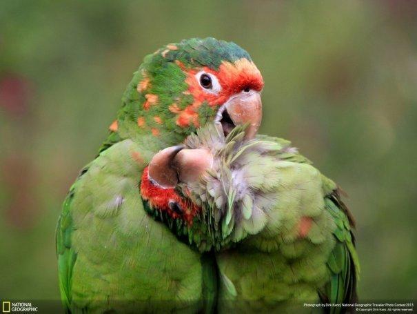 Отобраны лучшие фото животных с фотоконкурса «National Geographic Traveler» - №15