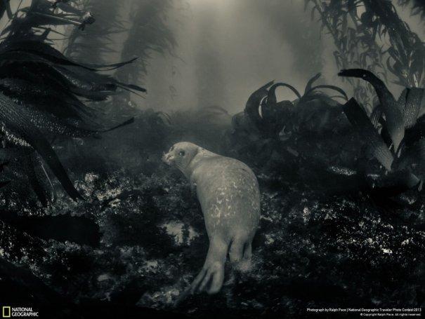 Отобраны лучшие фото животных с фотоконкурса «National Geographic Traveler» - №16