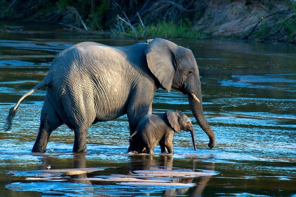 Отобраны лучшие фото животных с фотоконкурса «National Geographic Traveler» - №17