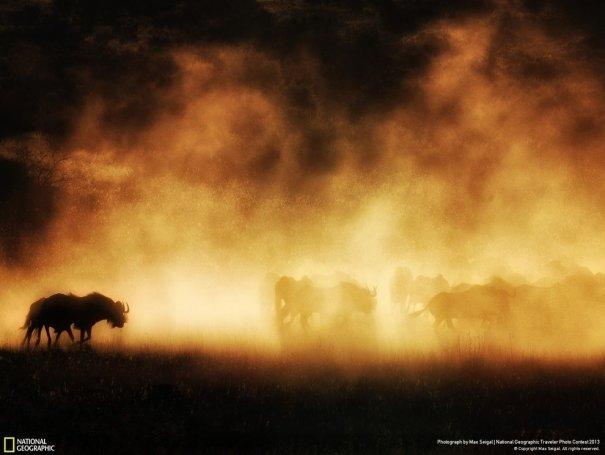 Отобраны лучшие фото животных с фотоконкурса «National Geographic Traveler» - №18
