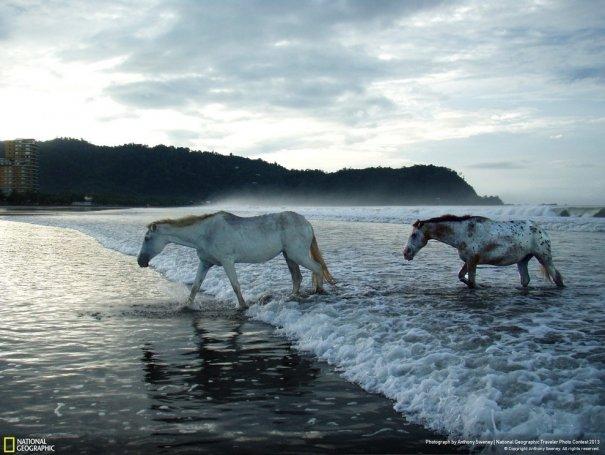 Отобраны лучшие фото животных с фотоконкурса «National Geographic Traveler» - №19