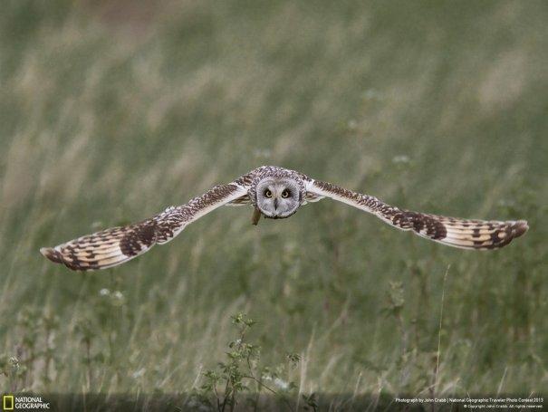 Отобраны лучшие фото животных с фотоконкурса «National Geographic Traveler» - №20