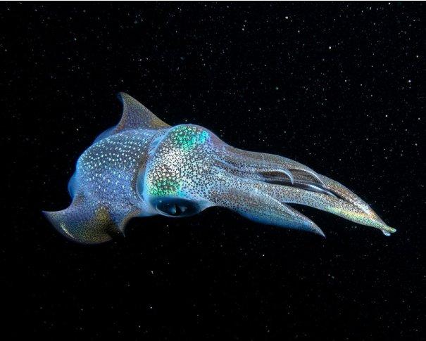 Отобраны лучшие фото животных с фотоконкурса «National Geographic Traveler» - №21