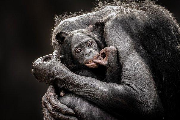 Отобраны лучшие фото животных с фотоконкурса «National Geographic Traveler» - №22