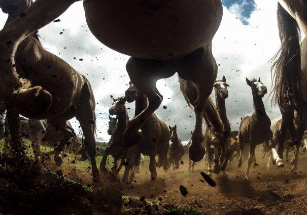 Отобраны лучшие фото животных с фотоконкурса «National Geographic Traveler» - №23