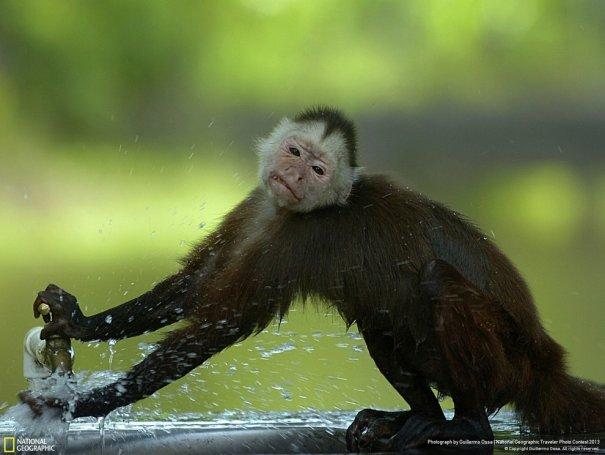 Отобраны лучшие фото животных с фотоконкурса «National Geographic Traveler» - №24