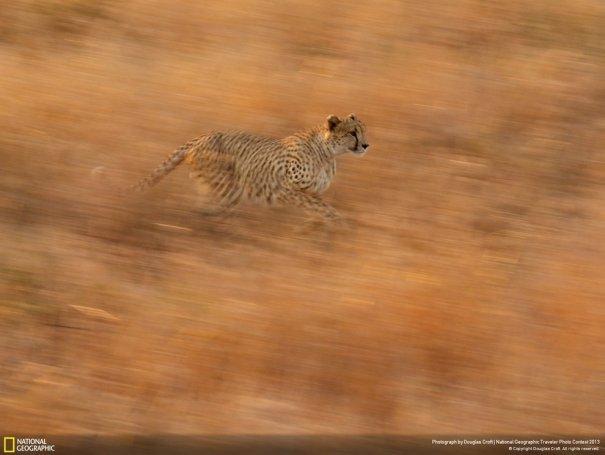 Отобраны лучшие фото животных с фотоконкурса «National Geographic Traveler» - №26