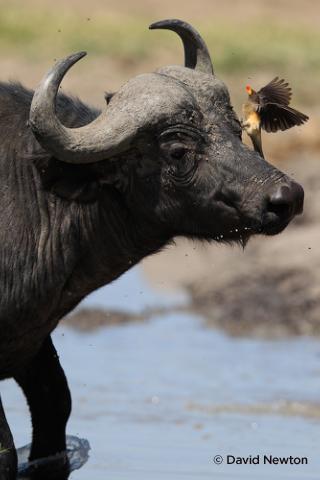 Съемка дикой природы на примере работ профессионала - №2
