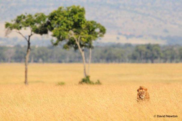 Съемка дикой природы на примере работ профессионала - №3