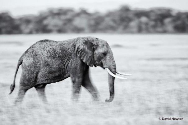 Съемка дикой природы на примере работ профессионала - №7