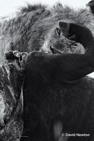 Съемка дикой природы на примере работ профессионала - №8