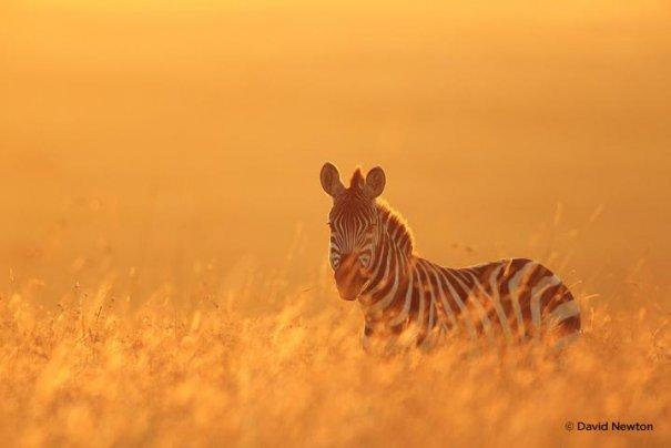 дикая природа Африки