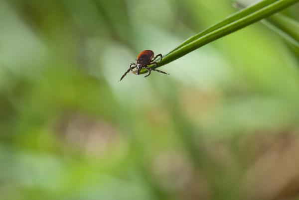 макро фото насекомые