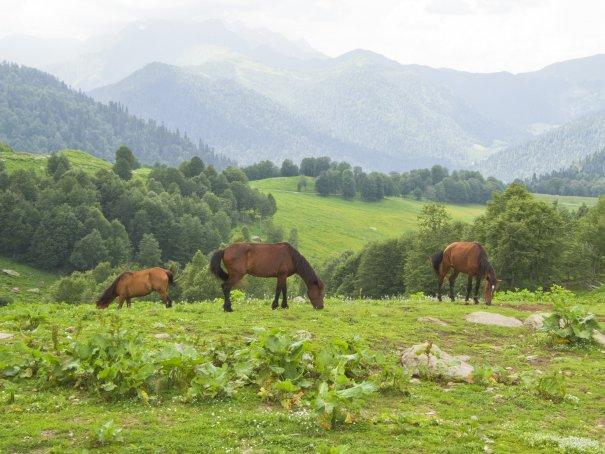 Путешествие в Долину семи озер. Абхазия. - №26