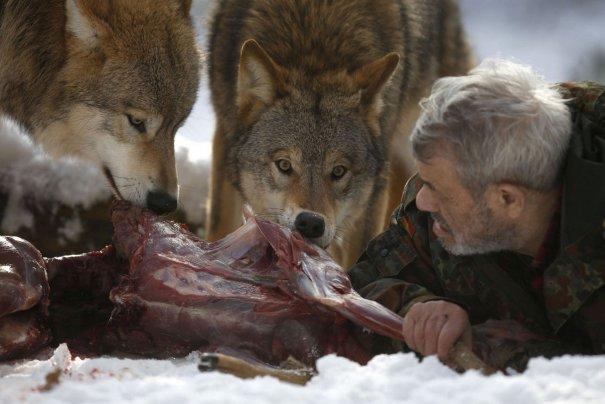 Среди 29 хищников Фройнд является главным вожаком, которого ни один зверь не смеет ослушаться.
