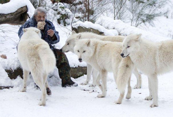 Вернер Фройнд с Полярными волками в немецком Мерциге, 24 января 2013 года.