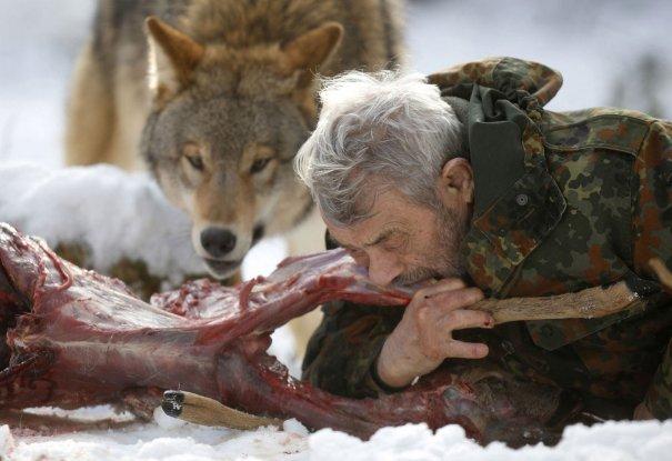 Вернер всегда начинает трапезу первым и не позволяет ни одному голодному волку подойти близко.