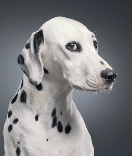 необычные фото собак