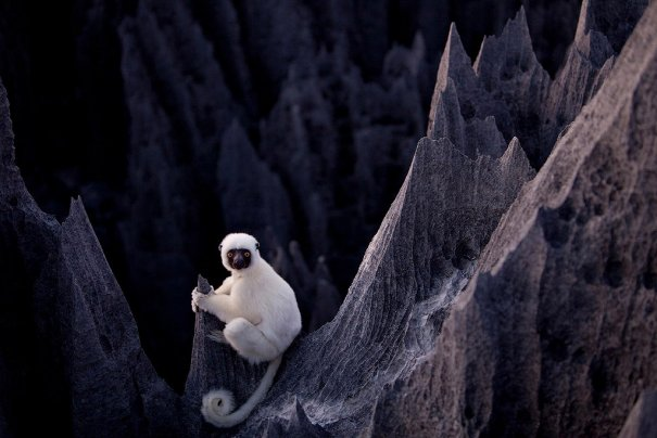 Загадочный каменный лес на острове Мадагаскар - №4