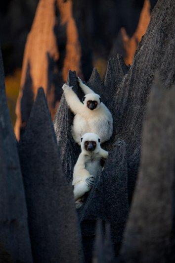 Загадочный каменный лес на острове Мадагаскар - №5