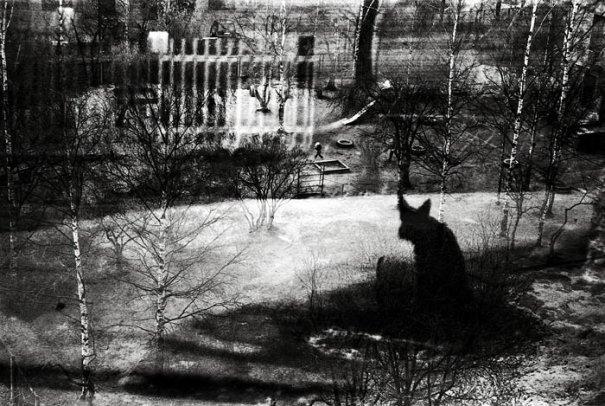 Сергей Вараксин любит случайные фото образы - №3