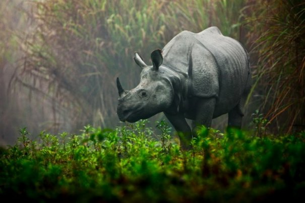 Ури Гольман фотографирует дикий, но притягательный животный мир - №1