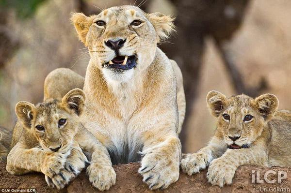 Ури Гольман фотографирует дикий, но притягательный животный мир - №3