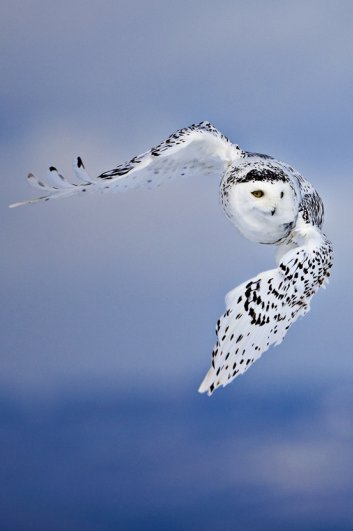Ури Гольман фотографирует дикий, но притягательный животный мир - №8
