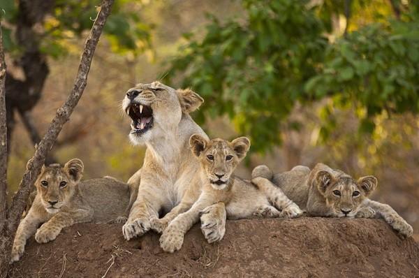 животный мир африки