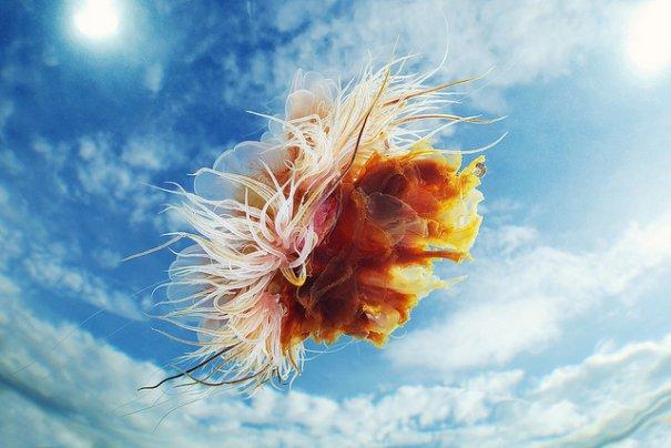 Необычные подводные фото - медузы на фоне неба - №1