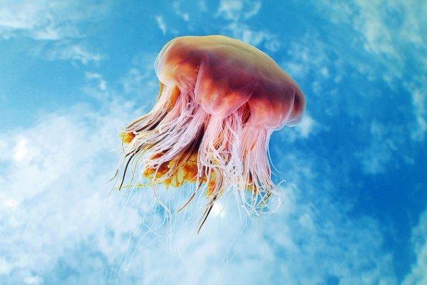 Необычные подводные фото - медузы на фоне неба - №2