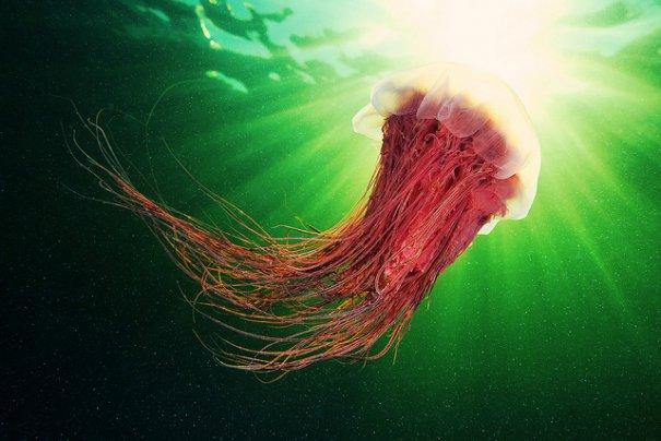 Необычные подводные фото - медузы на фоне неба - №5