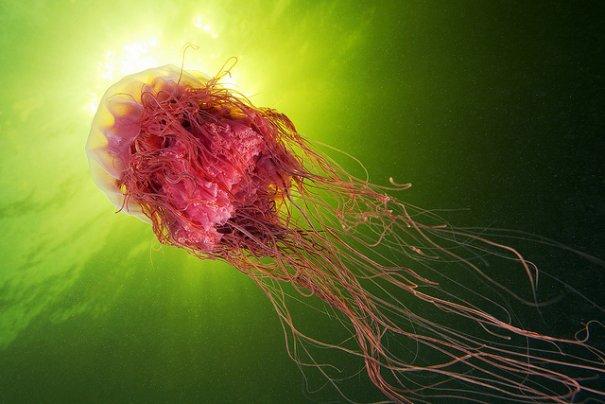 Необычные подводные фото - медузы на фоне неба - №7