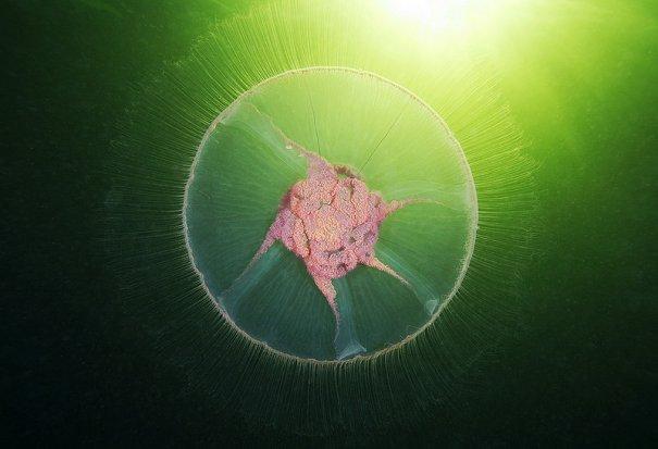 красивые подводные фото
