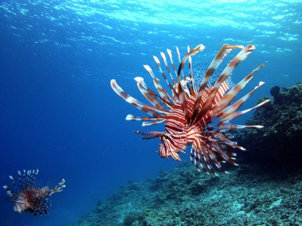 Примеры красивых подводных фото - №4