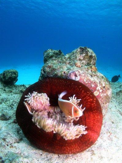 Примеры красивых подводных фото - №5