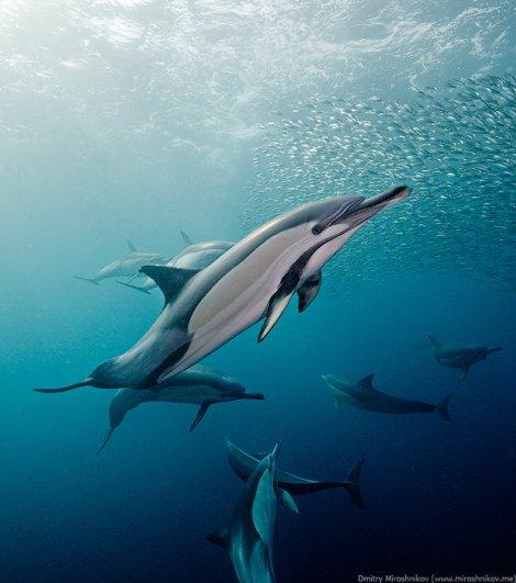 Примеры красивых подводных фото - №7