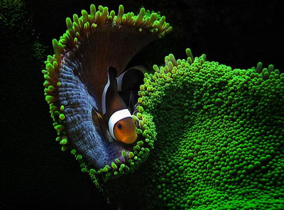 Примеры красивых подводных фото - №8