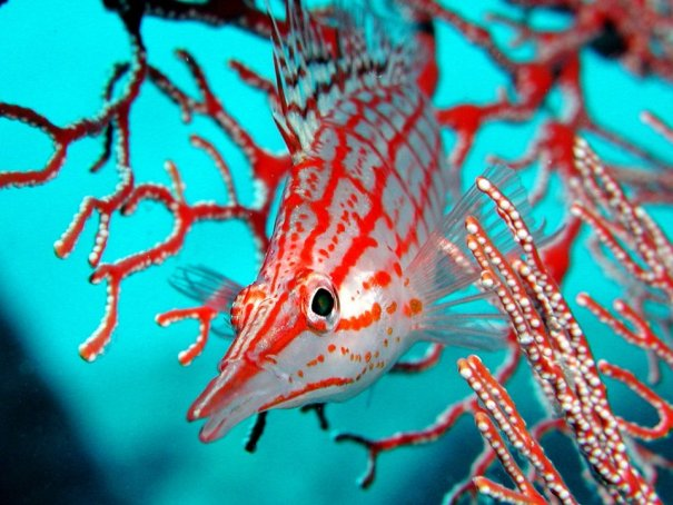 Примеры красивых подводных фото - №9