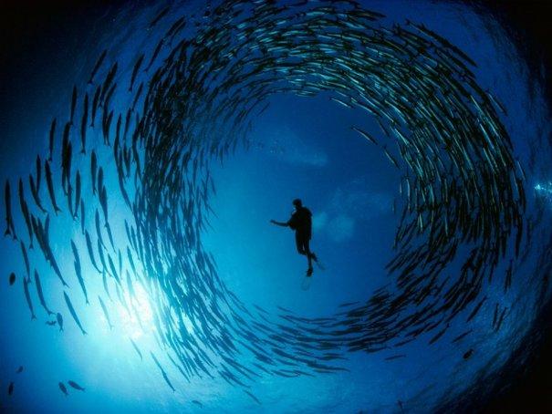 Примеры красивых подводных фото - №10