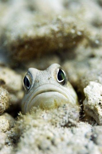 Примеры красивых подводных фото - №13