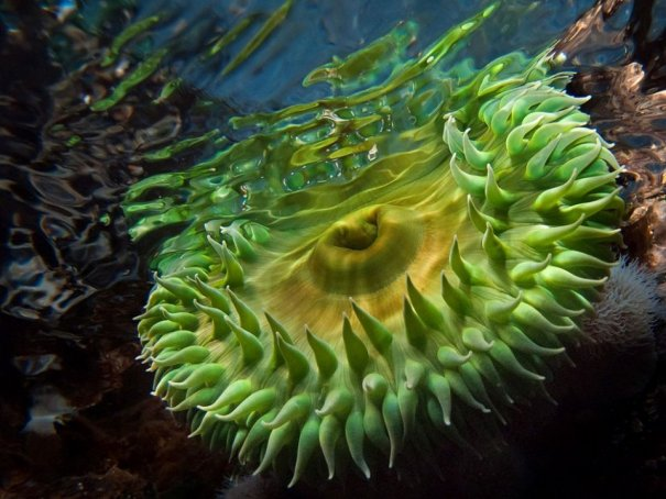 Примеры красивых подводных фото - №14