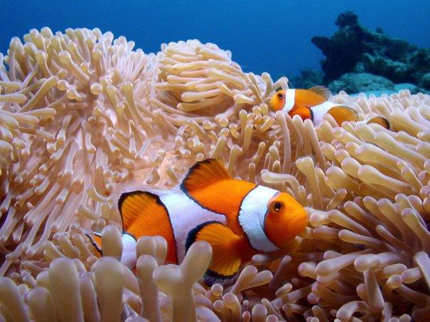 Примеры красивых подводных фото - №16