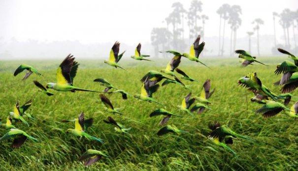 Лучшие фото о путешествиях от National Geographic - №15