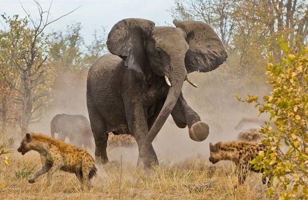 Лучшие фото о путешествиях от National Geographic - №16