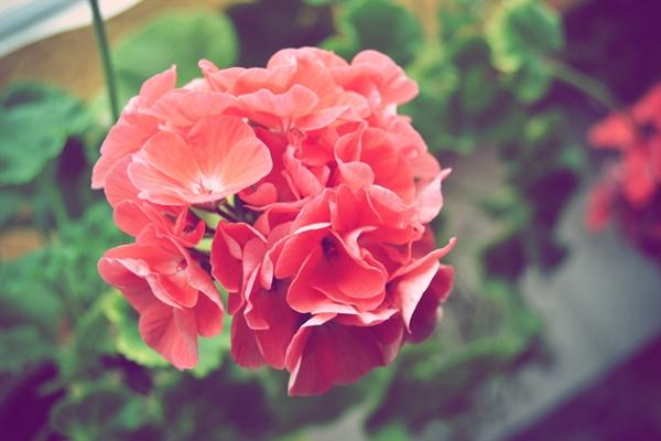 Цветочек.
