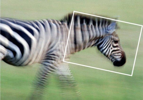 Тонкости динамичной фото съемки от профессиональных фотографов - №1