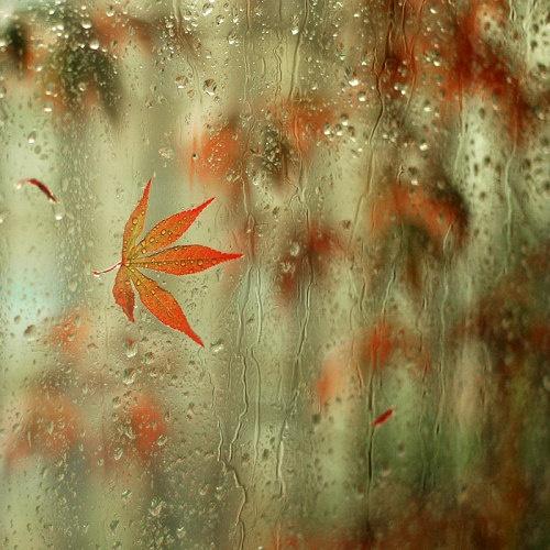 35 фото кадров сделанных в плохую погоду. - №8